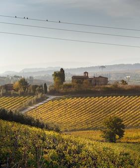 Виноградники в италии. фото принятое в тоскану на осень.