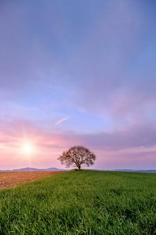 日没時に緑の丘の上の孤独な木。トスカーナの丘の中で美しい夕日。夕焼け雲と紫の空。イタリア。
