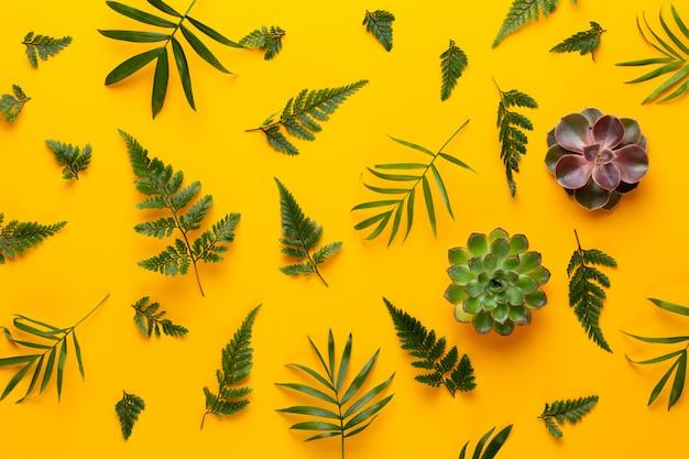 黄色のテーブルの上の緑の植物。