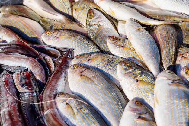 На прилавке красиво выложен свежий улов рыбы.