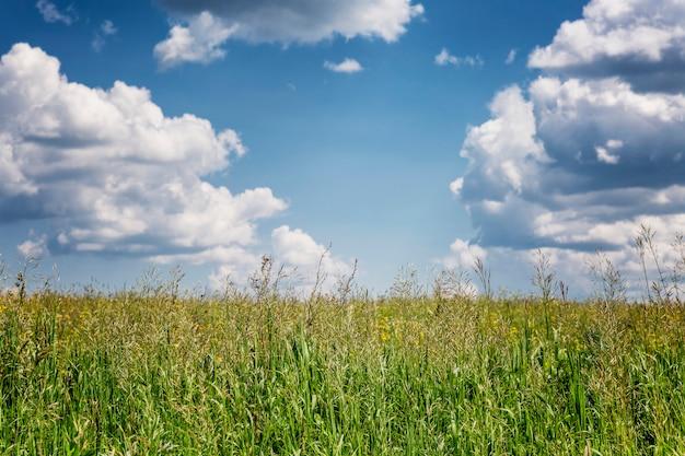 緑の野原と積雲の雲と明るい青空。晴れた日に美しい穏やかな夏の自然。