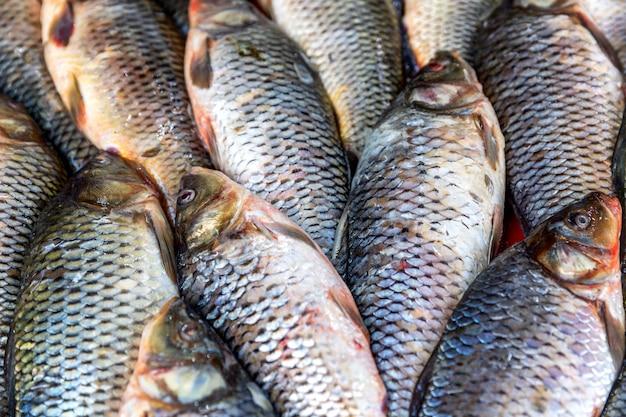 カウンターで生の大きな魚をクローズアップ。