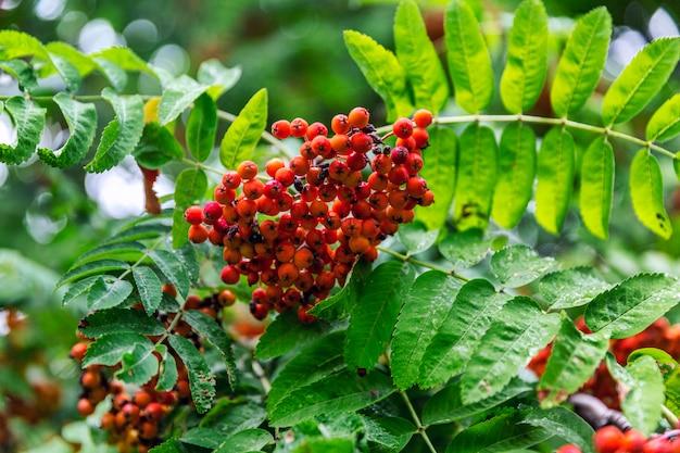 木の果実とナナカマドの枝。