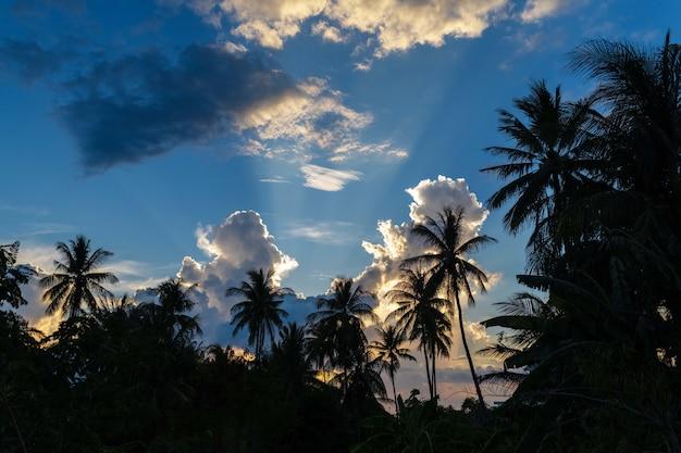 ヤシの木は、驚くほどの熱帯の日没時に下から上への眺めをシルエットします。