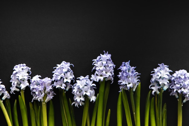 ヒヤシンスの青い花の花の線形構成。グリーティングカードのコピースペースとトップビューの背景