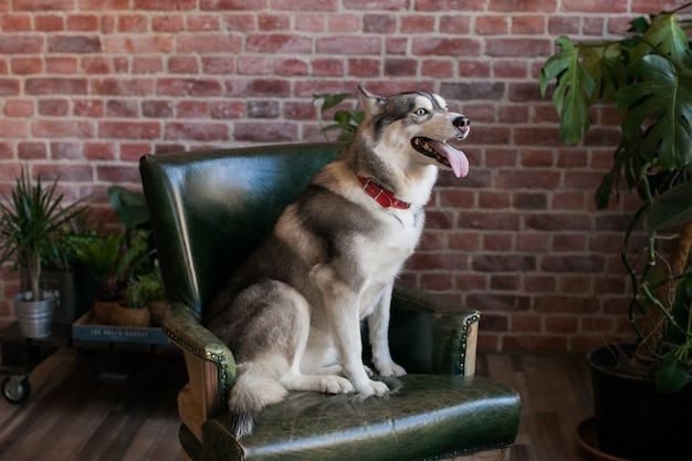 キッズスキン犬の肖像