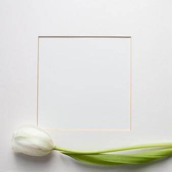 開花白いチューリップの花と白い背景の上の紙カード