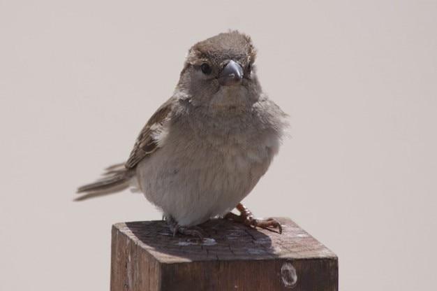 景色直接自然動物鳥かわいいスズメ