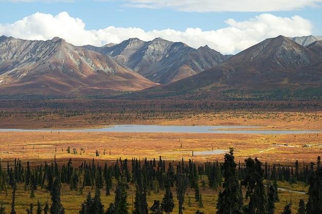 アラスカの森林山岳荒野の木の山