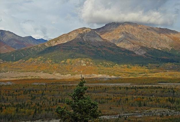 アラスカの荒野森の木々の山をツンドラ