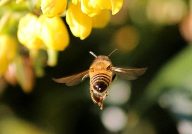 昆虫を刺すと飛ぶ蜂の蜜蜜を受粉