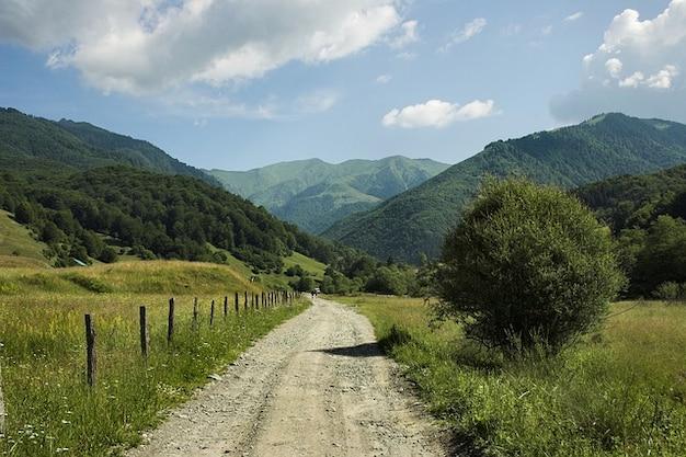 ルーマニアの森の風景山々木の森