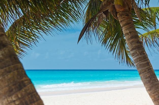 海の風景、海岸、美しいビーチ椰子