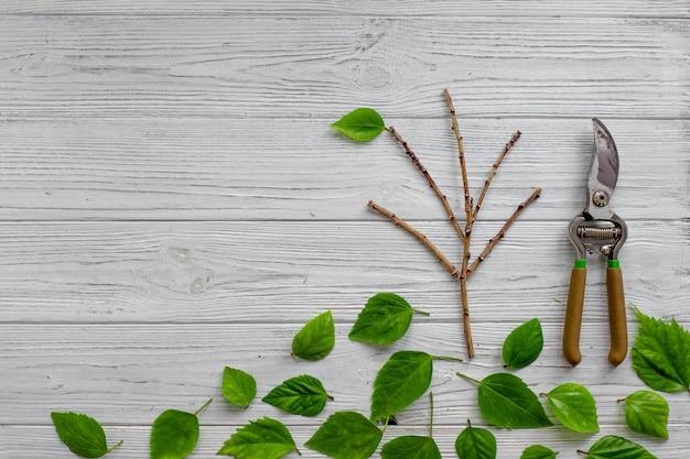 白い素朴な木製の背景に庭の剪定ばさみと緑の葉