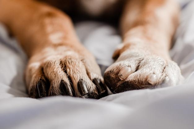 ベッドの上の犬の足のクローズアップ