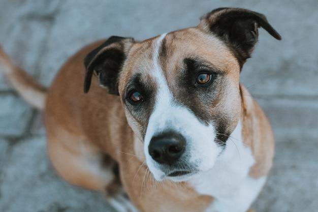 セメントの床でカメラを探している犬の背景