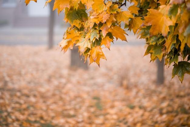 秋の公園。秋の木々と葉