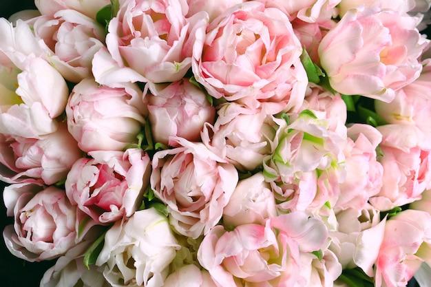 美しいピンクのチューリップ、花