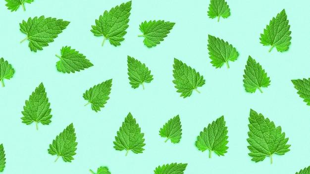 緑のパターンに分離されたメリッサの葉またはレモンバーム