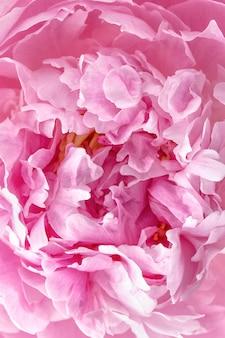 牡丹の花びらをクローズアップ