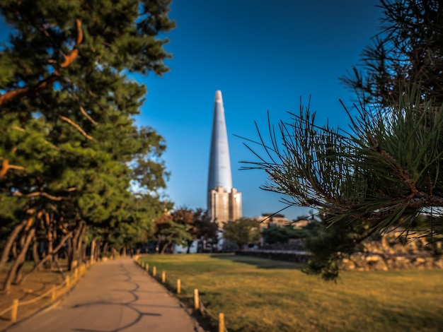 背後にある美しい塔と松の枝