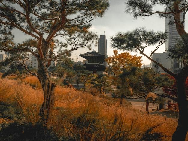 Осень в сеуле. парк с национальным дворцом позади
