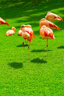 Крупный план красивой группы фламинго на траве в парке