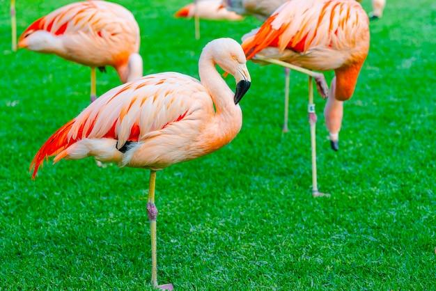 公園の芝生で寝ている美しいフラミンゴグループのクローズアップ