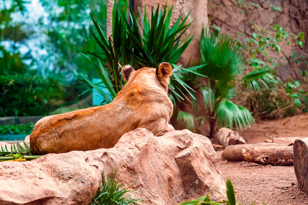 緑の植物で地面に横たわっている雌ライオンのクローズアップ