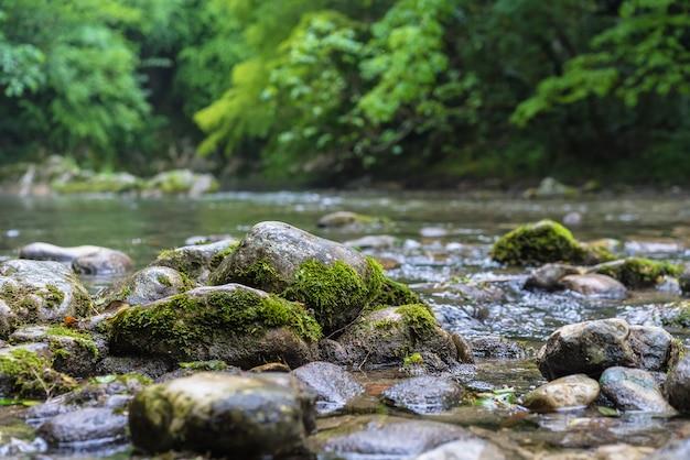 緑の森を流れる山川。苔で覆われた岩の上の急速な流れ