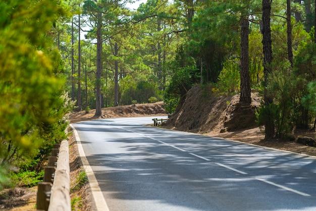 山林の木製フェンスと曲がりくねった道。明るい緑の森と明るい太陽の光。