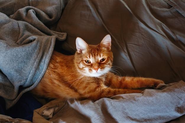 Милый ленивый рыжий кот