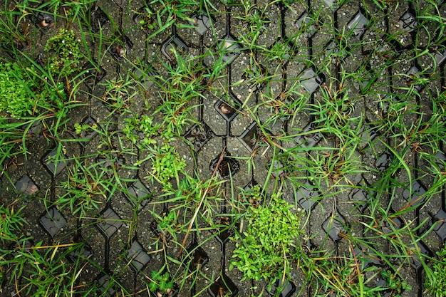 雨の後の緑の濡れた道