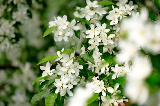 Весенние цветы в саду крупным планом