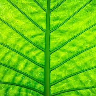 緑の葉のテクスチャーを閉じる