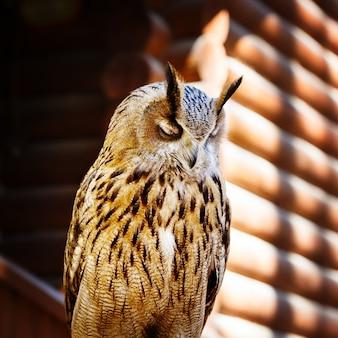 Мечтать сова крупным планом портрет