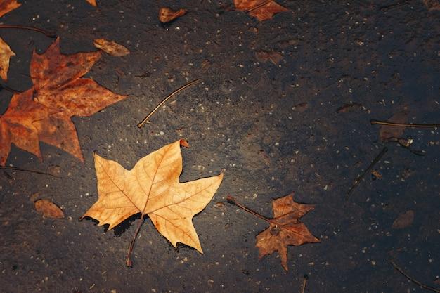 Осенний фон с кленовым листом