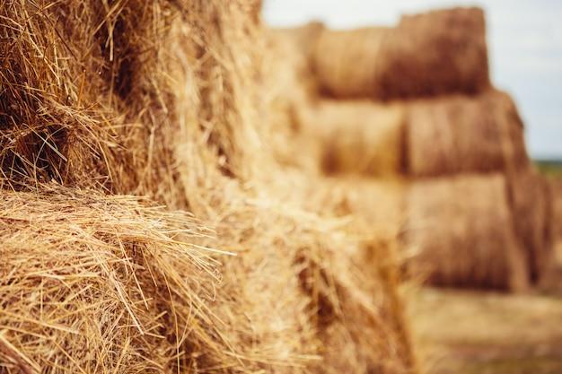 収穫後のフィールドで干し草の俵