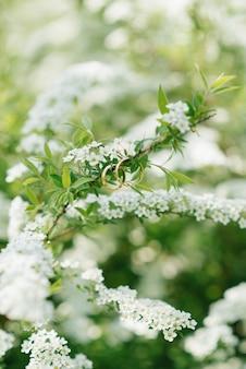 結婚指輪は、結婚式の春に多くの白い花を持つブッシュの枝に掛かります
