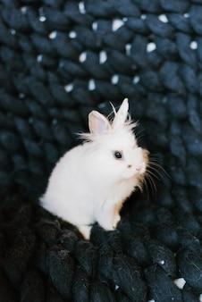 Белый пушистый кролик на вязаном темно-синем пледе