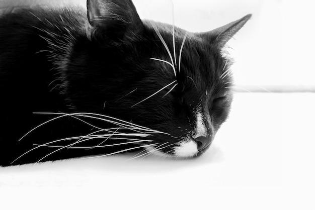 白い窓枠に寝ている黒い猫の頭。