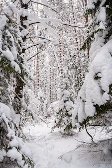 曇りの日にすてきな雪に覆われた冬の森。