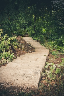 森の奥深くに消える狭い石の階段。