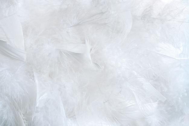 多くのふわふわの鳥の羽の繊細で自然な白い背景。