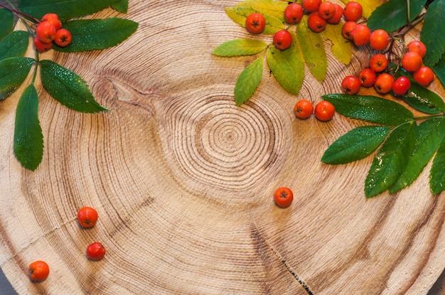 Листья рябины и ягоды на круглой пиле срезают лиственницу.