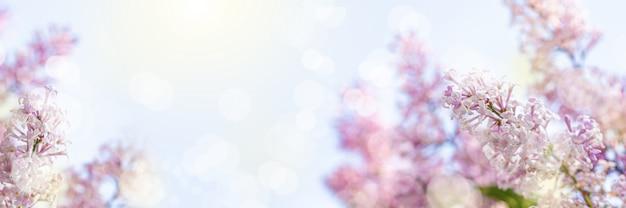 フレアとボケ味を持つ青い空を背景に太陽に照らされたライラックの枝。招待状やグリーティングカードのライラックの花の美しい開花のクローズアップデザイン。コピースペース。ワイドバナー。