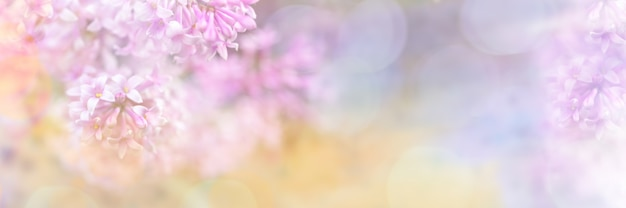 招待状やグリーティングカードのボケ味を持つライラック色の花の美しいぼやけた黄色ピンクデザイン枠。ぼやけたライラックの枝のクローズアップ。ソフトフォーカス。テキストのスペースをコピーします。ワイドバナー。