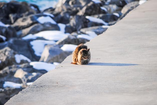 孤独な猫は海岸で漁師を待っています