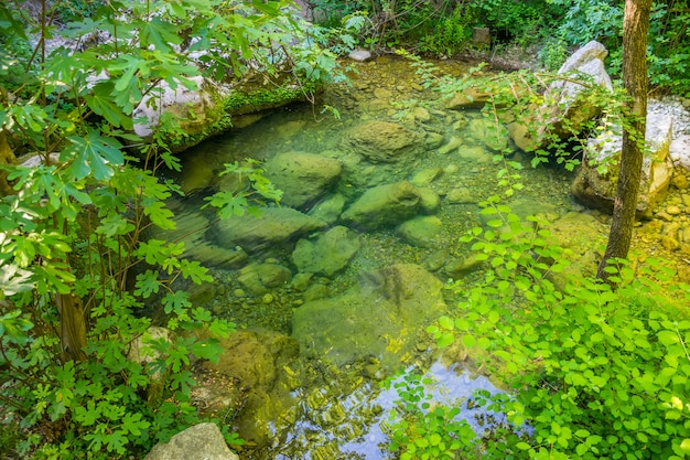 野生の森の緑のラグーン