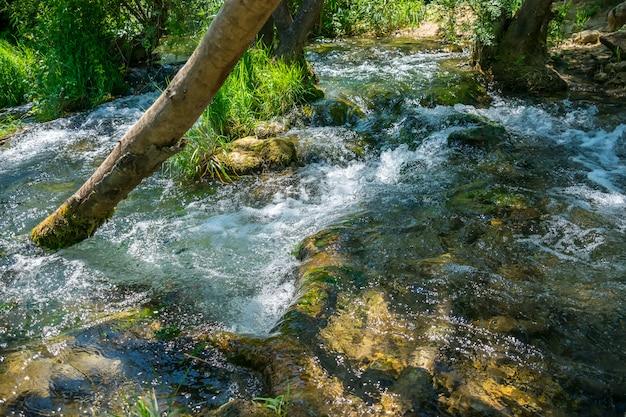 森の小川は木の幹の間を流れ、高い滝から落ちます。